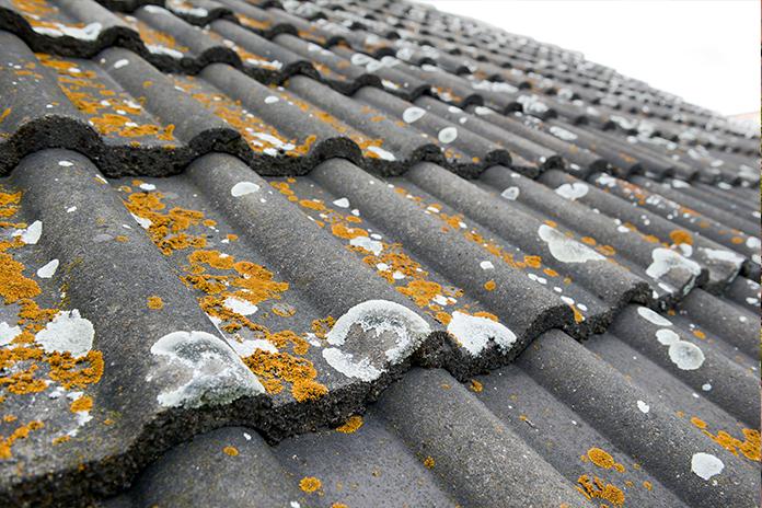 Mos op het dak